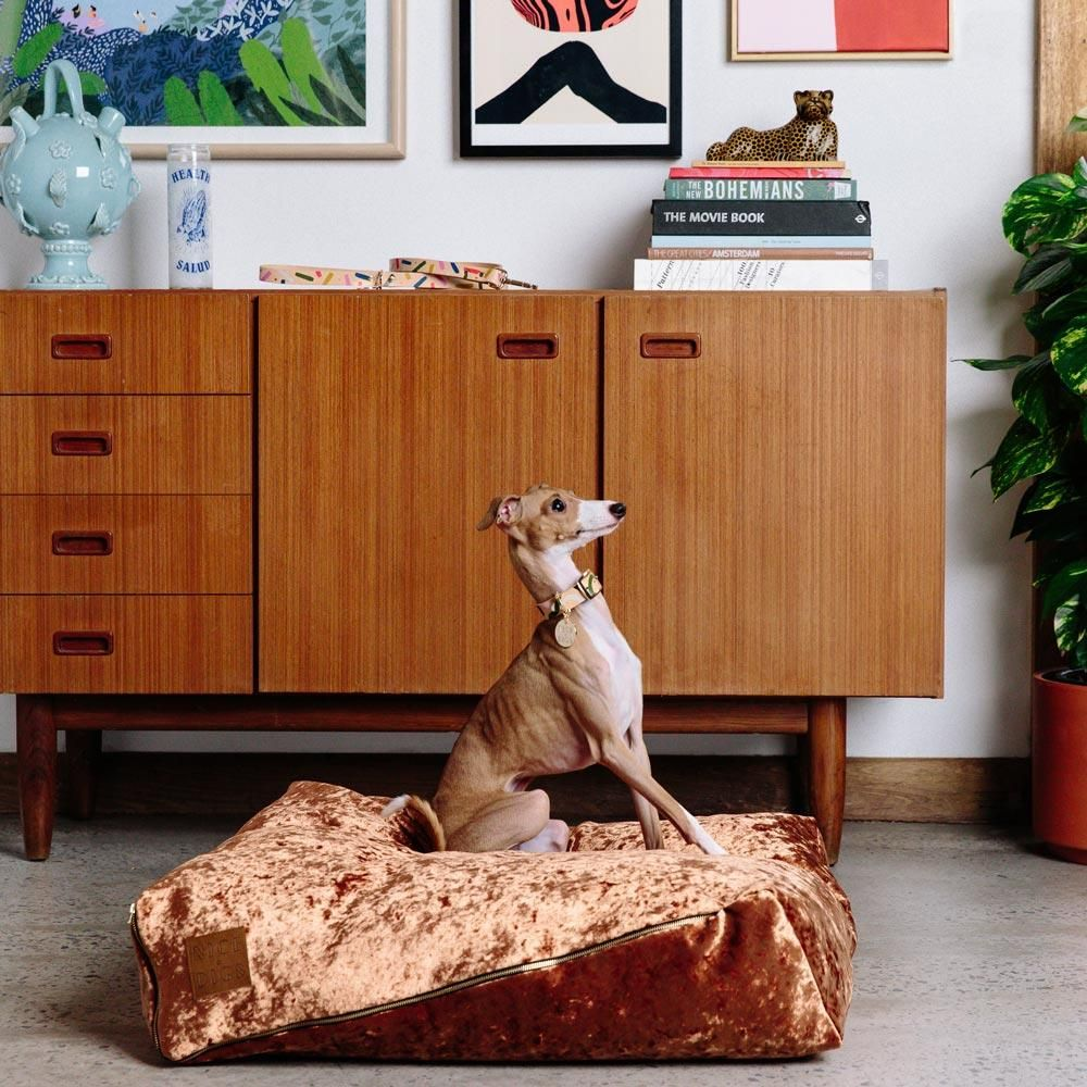 Velvet Slouch Dog Bed Copper Covered dog bed, Dog bed