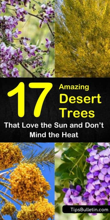 17 Amazing Desert Trees that Love the Sun and Don't Mind the Heat
