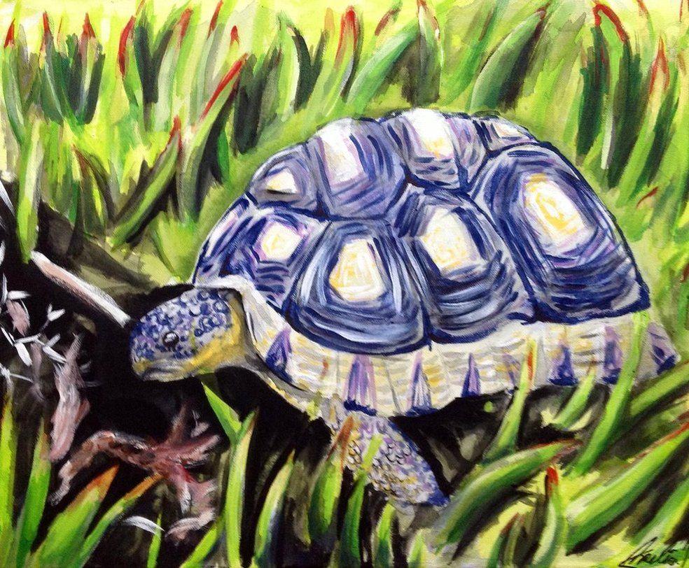 Turtle by jaqoo ЧЕРЕПАХИ pinterest turtle