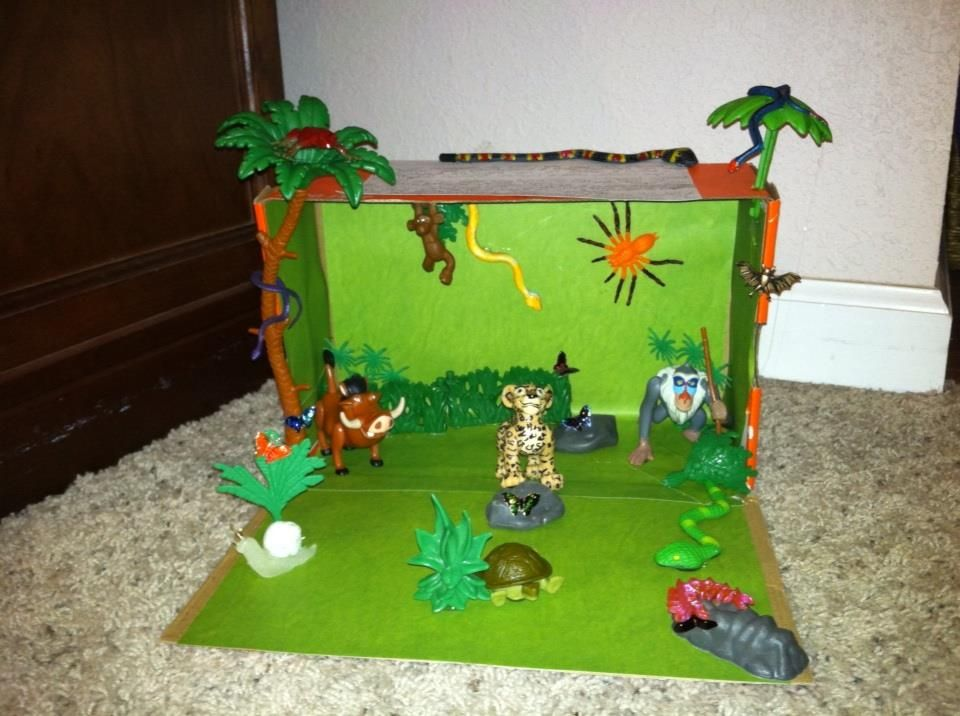 Tropical Rainforest (Biome Project)