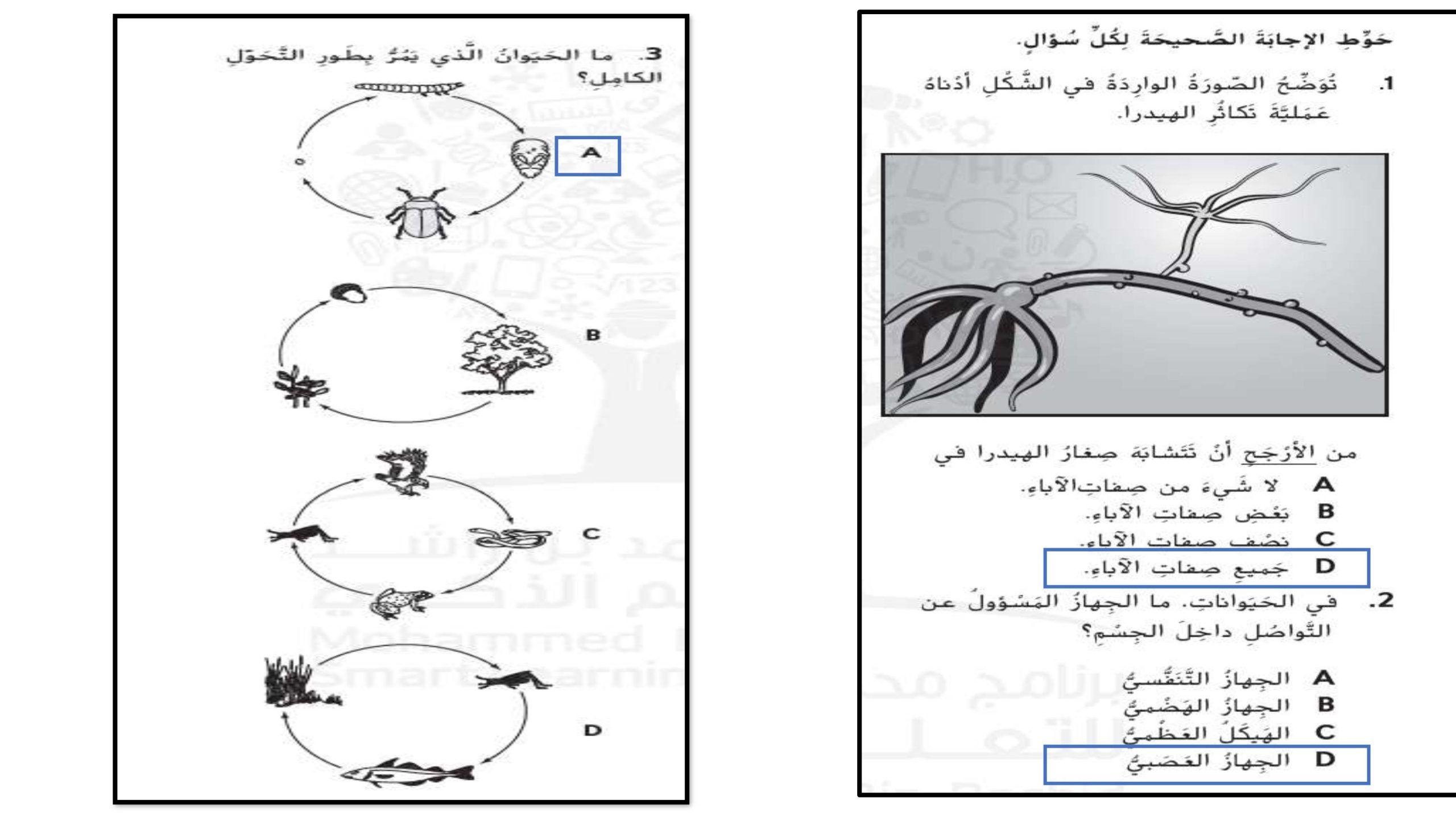 حل اسئلة الكتاب مراجعة الصف الرابع مادة العلوم المتكاملة