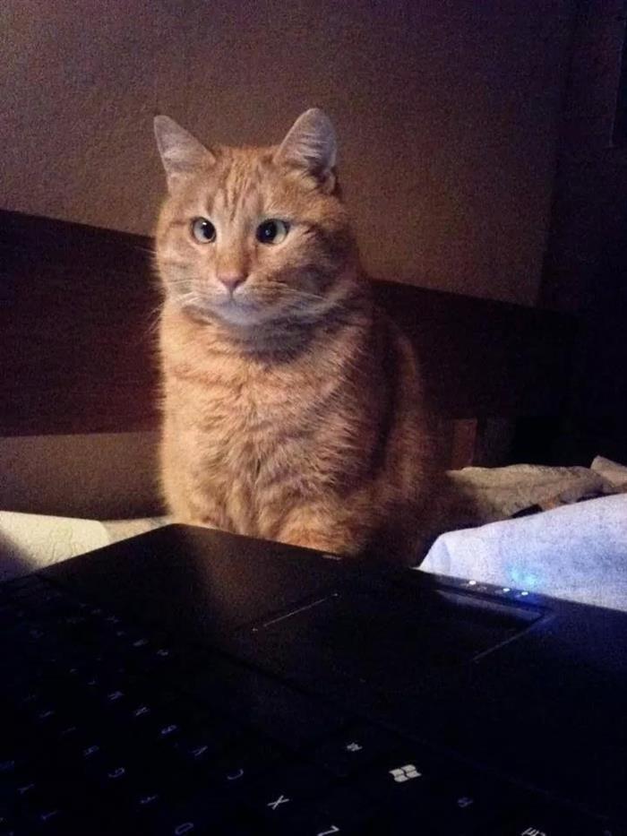 Estrabismo Gatuno Gatos Memes De Gatos Divertidos Meme Gato