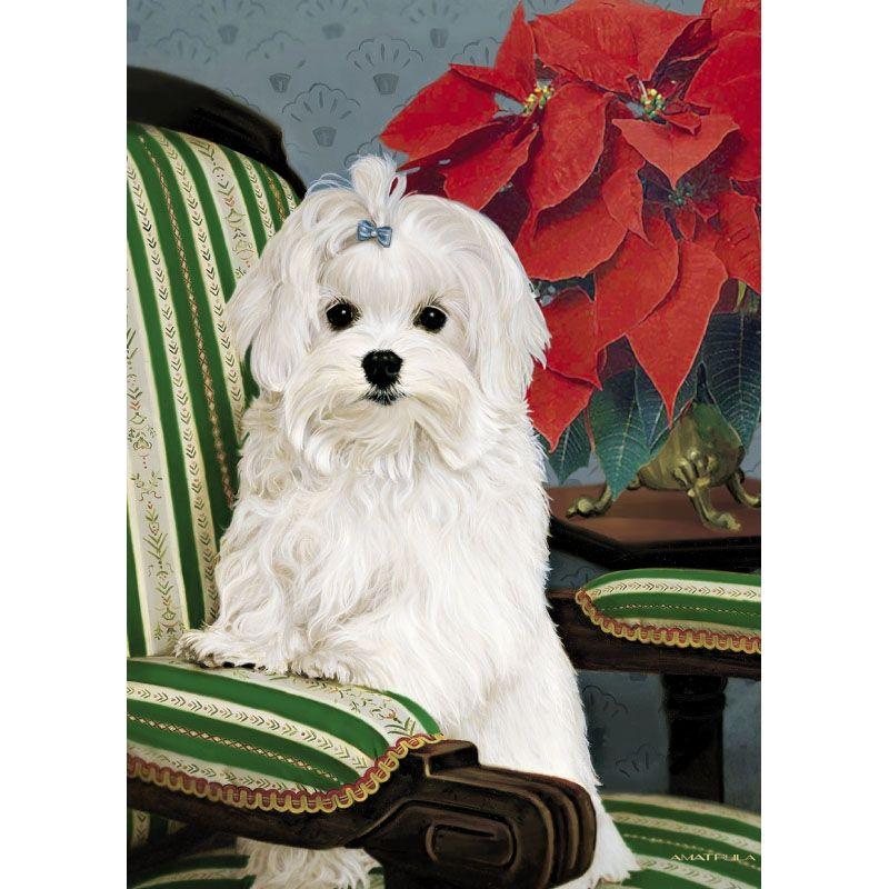 Maltese Christmas Cards Maltese Dogs Merry Christmas Dog