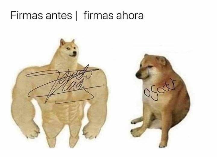 Antes Ahora Meme De Perro Grande Perro Chico Imagenes Memes Generadormemes Perro Chico Meme Gato Perros Grandes