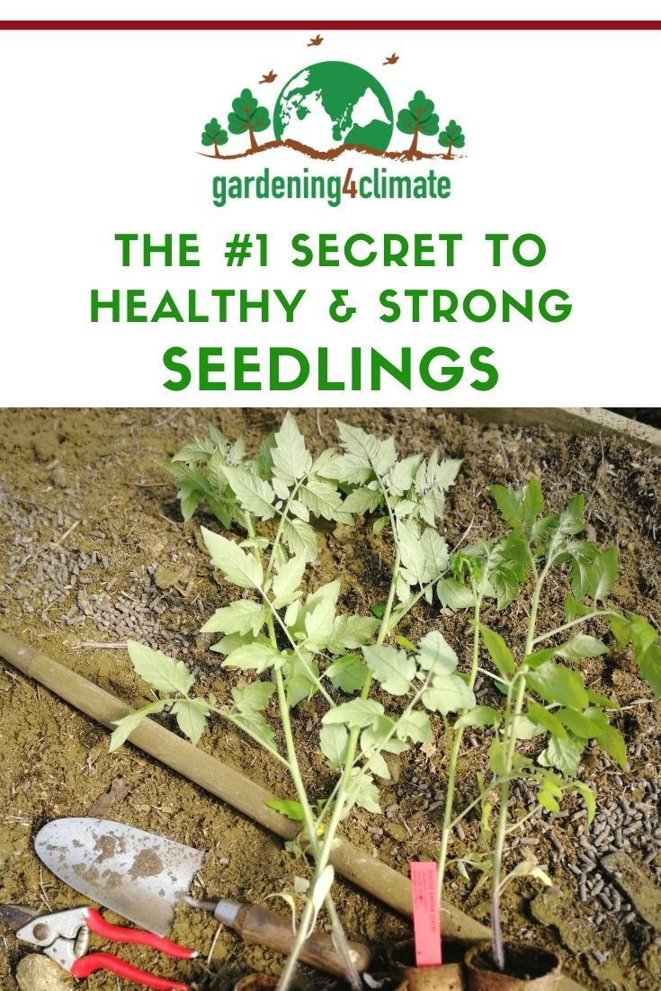 The right timing with sowing your seeds is the secret to success for a productive vegetable garden. Learn here how to calculate the best time for sowing vegetable seeds for strong and healthy seedlings. #gardening #gardeningtips #permaculture #homesteadgarden #organicgardening #homesteading #urbangardening #vegetablegardening #growingfood #gardening4climate #gardeningforclimate #seeds #startingseedsindoors