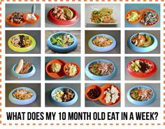 What does my 10 month old eat in a week baby led weaning led baby food recipes forumfinder Images