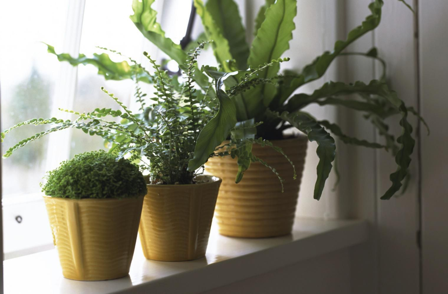 Get The Light Right Natural Light For Houseplants
