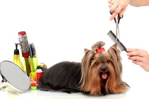 Is Your Pet In Need Of A Makeover At Otay Pet Vets We Offer