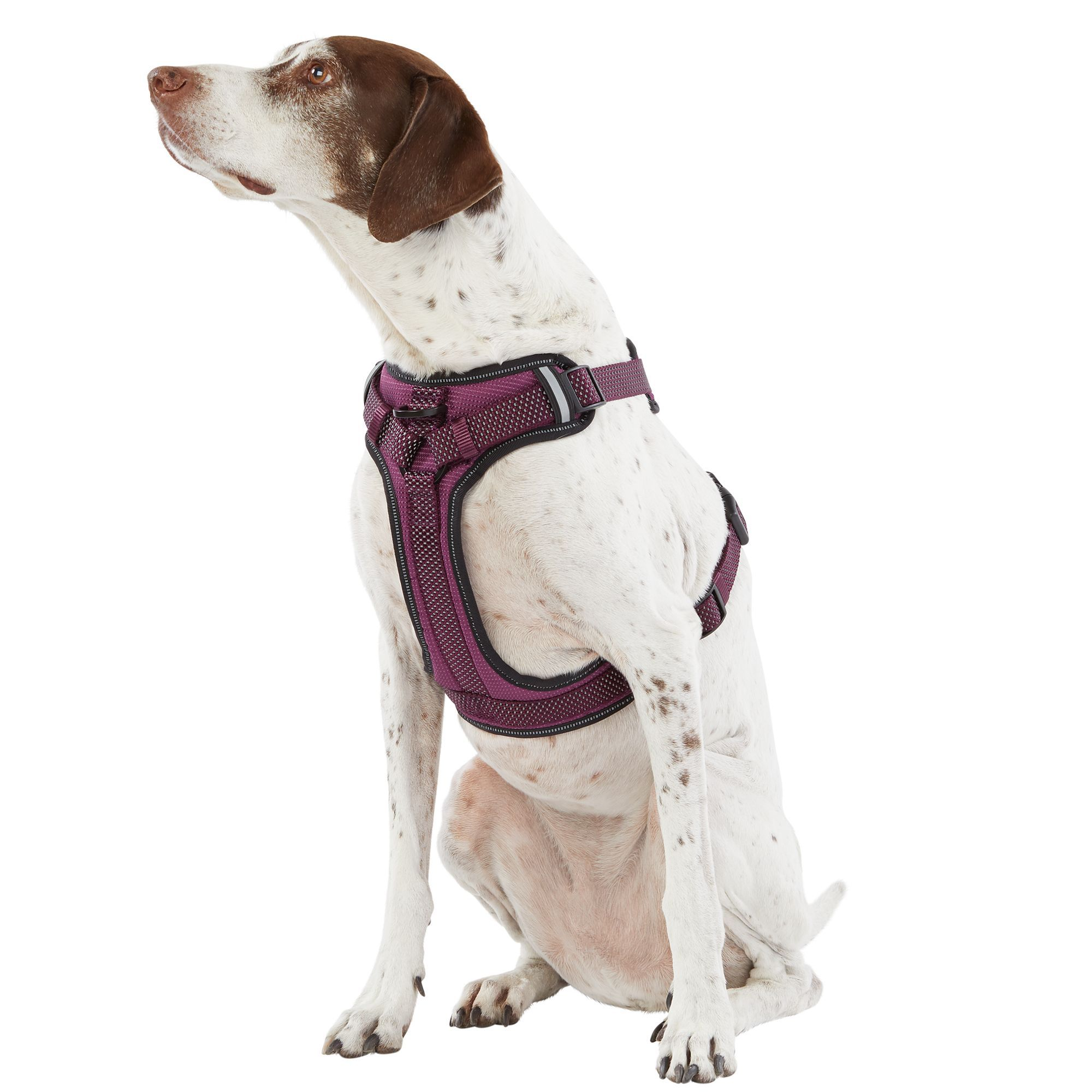 Top Paw Ultra Reflective Dog Harness Size Large Purple Dog