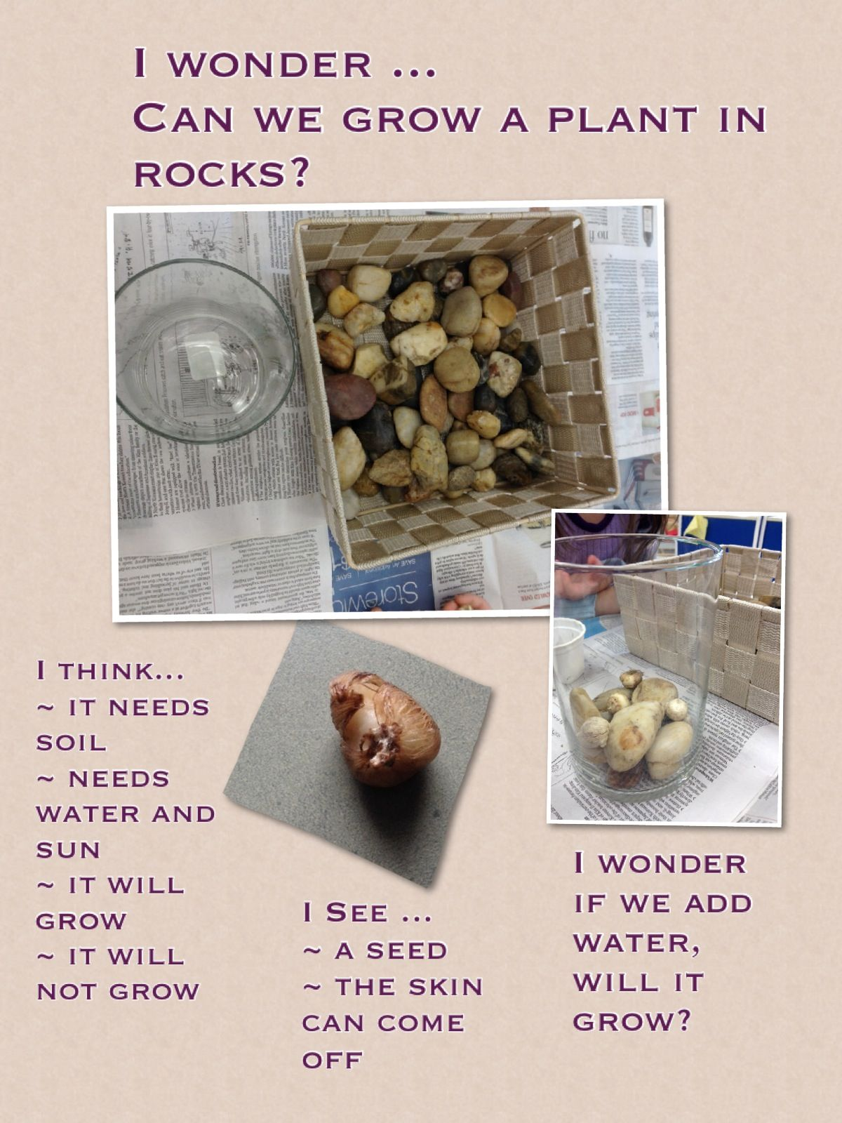 Can We Grow A Plant In Rocks