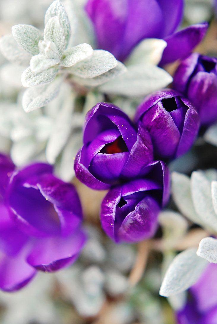 Violet magic by BlueColoursOfNature on deviantART