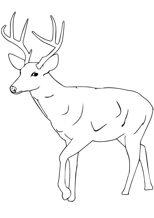 print coloring image - MomJunction | Deer coloring pages ...