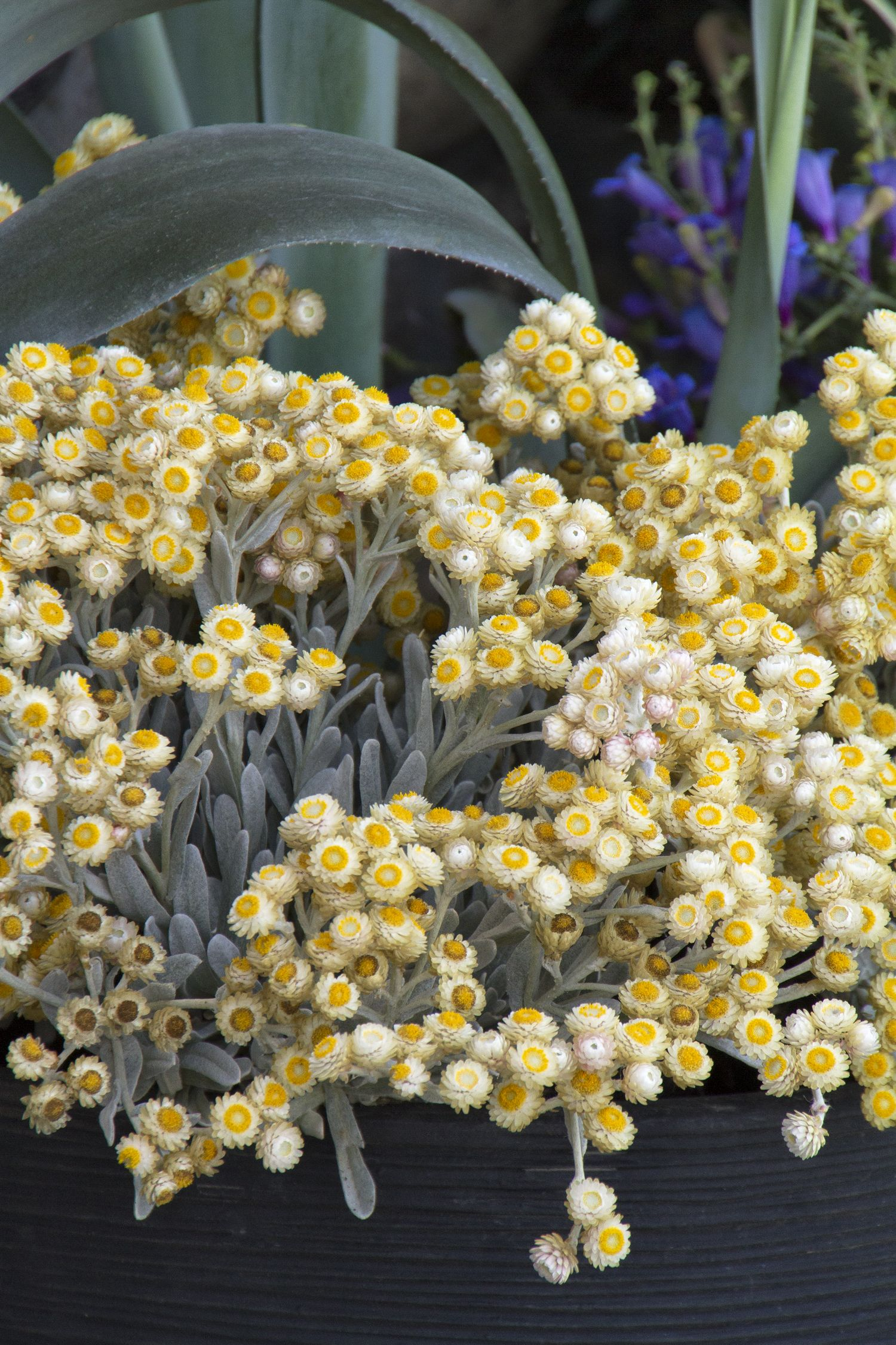 Ring The Dinner Bell Grow A Pollinator Border Pinterest