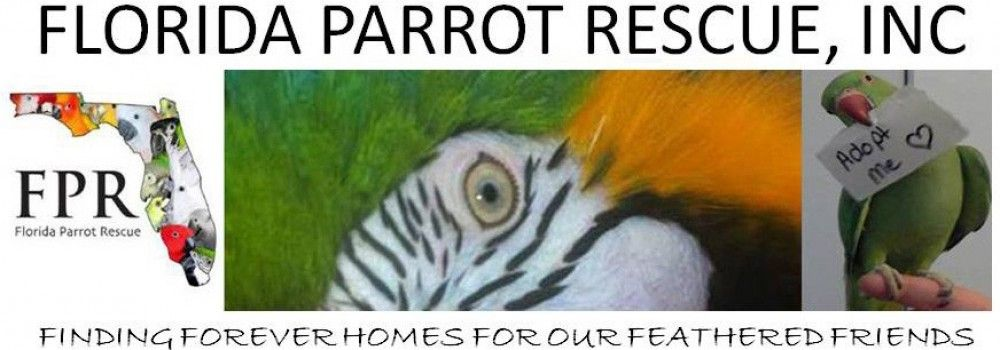 Florida Parrot Rescue Works Throughout The Entire State Of Florida