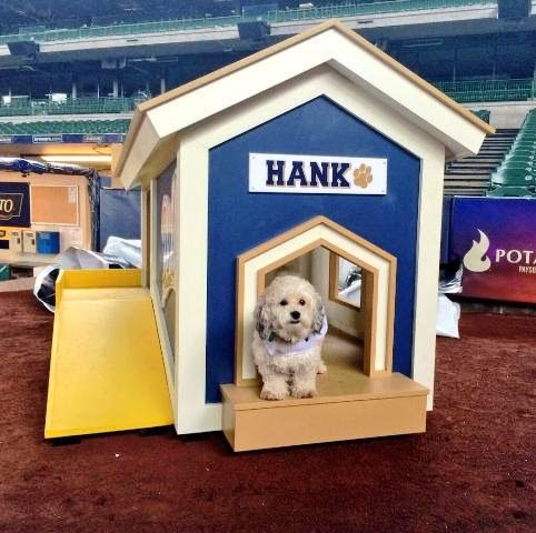 Hank The Rescued Pooch From The Brewers Training Camp In Arizona