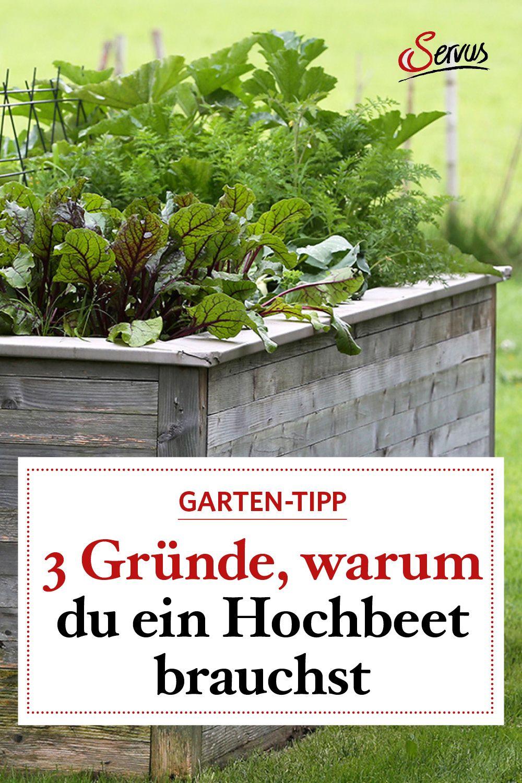 3 Grunde Warum Sie Ein Hochbeet Brauchen Servus Hochbeet Naturgarten Gartenpflege