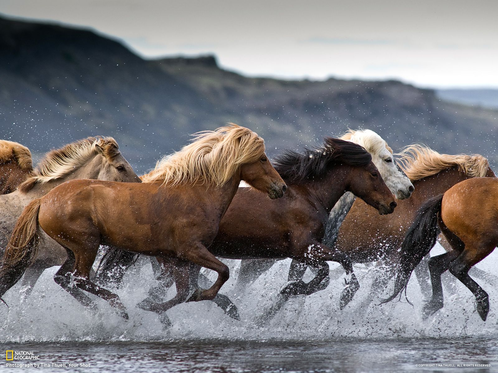 Wonderful Wallpaper Horse National Geographic - d9d3a58781f4f7940778fcff905fa2dc  Best Photo Reference_355749.jpg