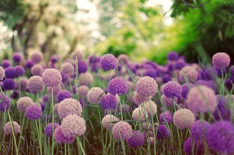 de las cosas violetas