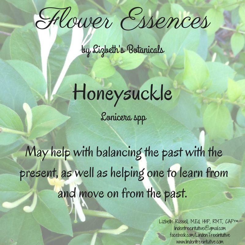 Honeysuckle Flower Essences Honeysuckle The Past