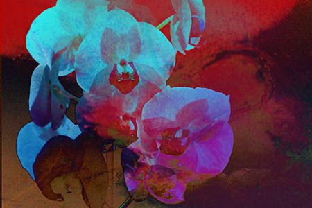 Orchid fantasy. Click image to view art and purchase.  http://www.yourphotofantasy.com  http://angelika-drake.artistwebsites.com