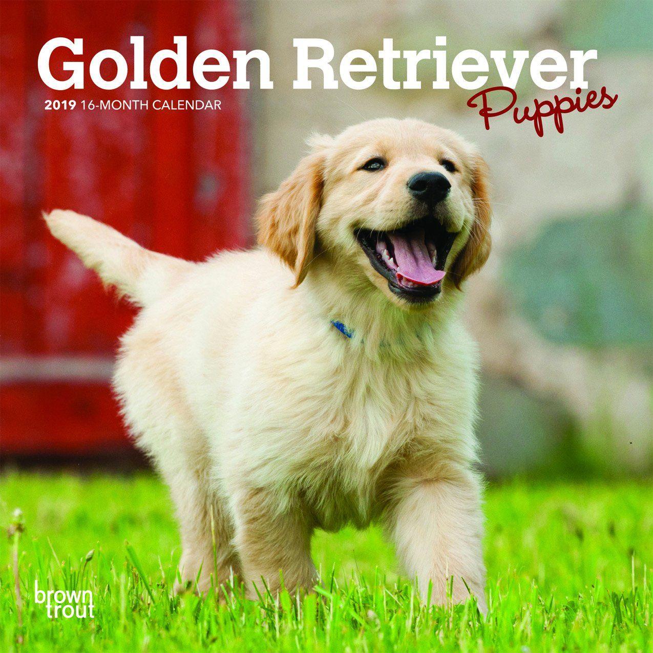 Golden Retriever Puppies 2019 Mini Wall Calendar Puppies Dog