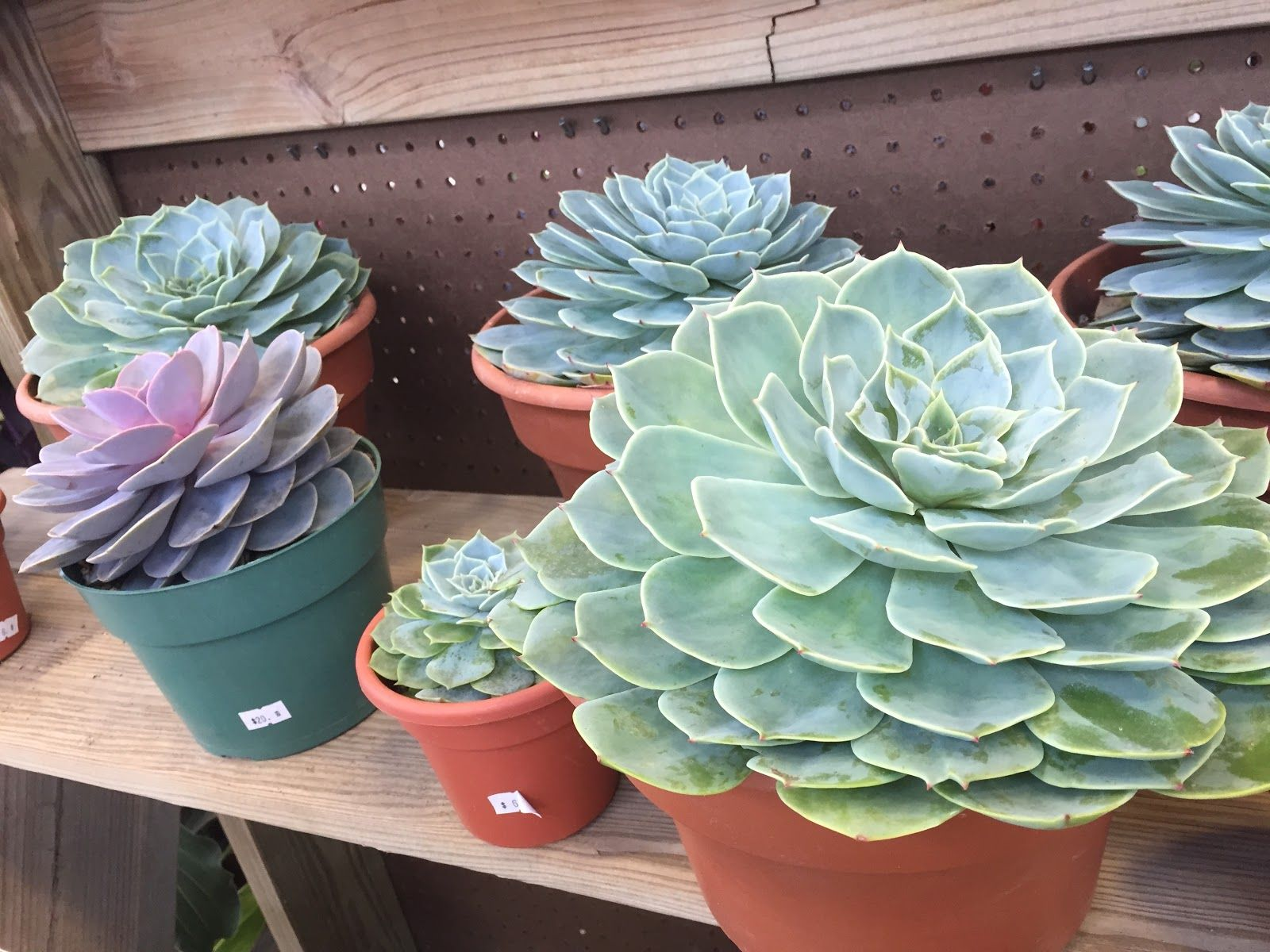 Succulents At The 2015 Indiana Flower And Patio Show [Backyard .
