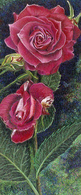 Donna Slade    COLORED PENCIL