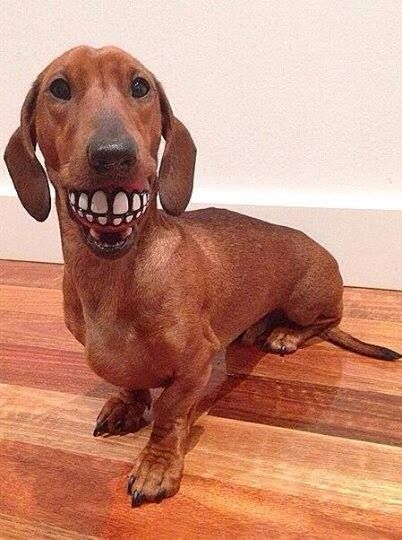 I Took Dad S Teeth When He Wasn T Looking Think He Ll Know I Ve