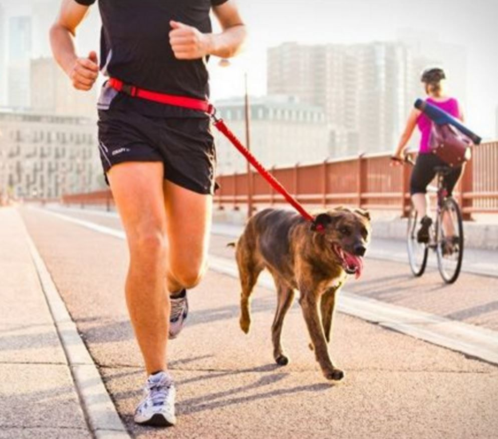 Handsfree dog leash for runners