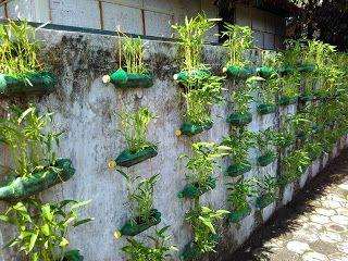 Mari Berbagi Ilmu Di Demplot Karang Tumaritis Bblm Yogyakarta