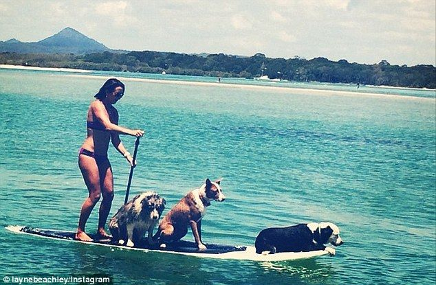 layne beachley paddle boards in noosa with three pups on deck with her