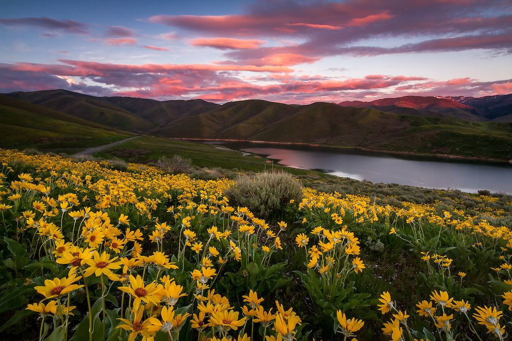 East Canyon Yellow Balsomroot Sunset Utah Landscape