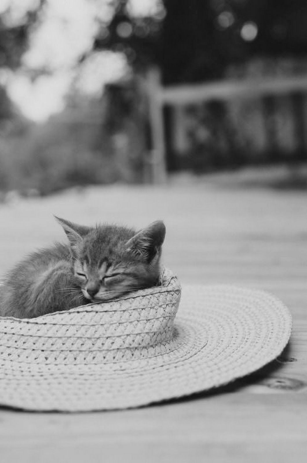 Pin by Sherry Andrews on AA3b. NaturePurrrfect Cats 3