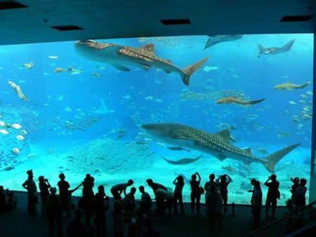Atlanta Ga Aquarium Largest Ever And Best Ever To See Have