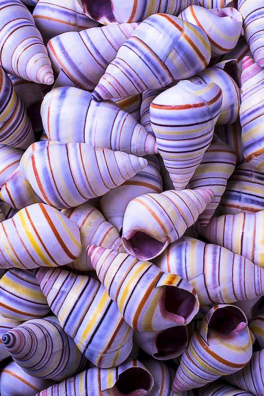 Spiral Sea Shells Art Print by Garry Gay