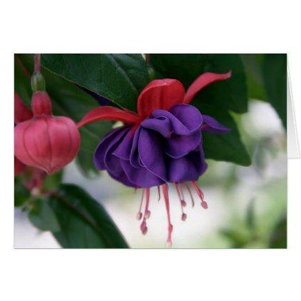 The Beauty Of Fuchsia Zazzle Com In 2020 Fuchsia Flower Fuchsia Flowers Pretty Flowers