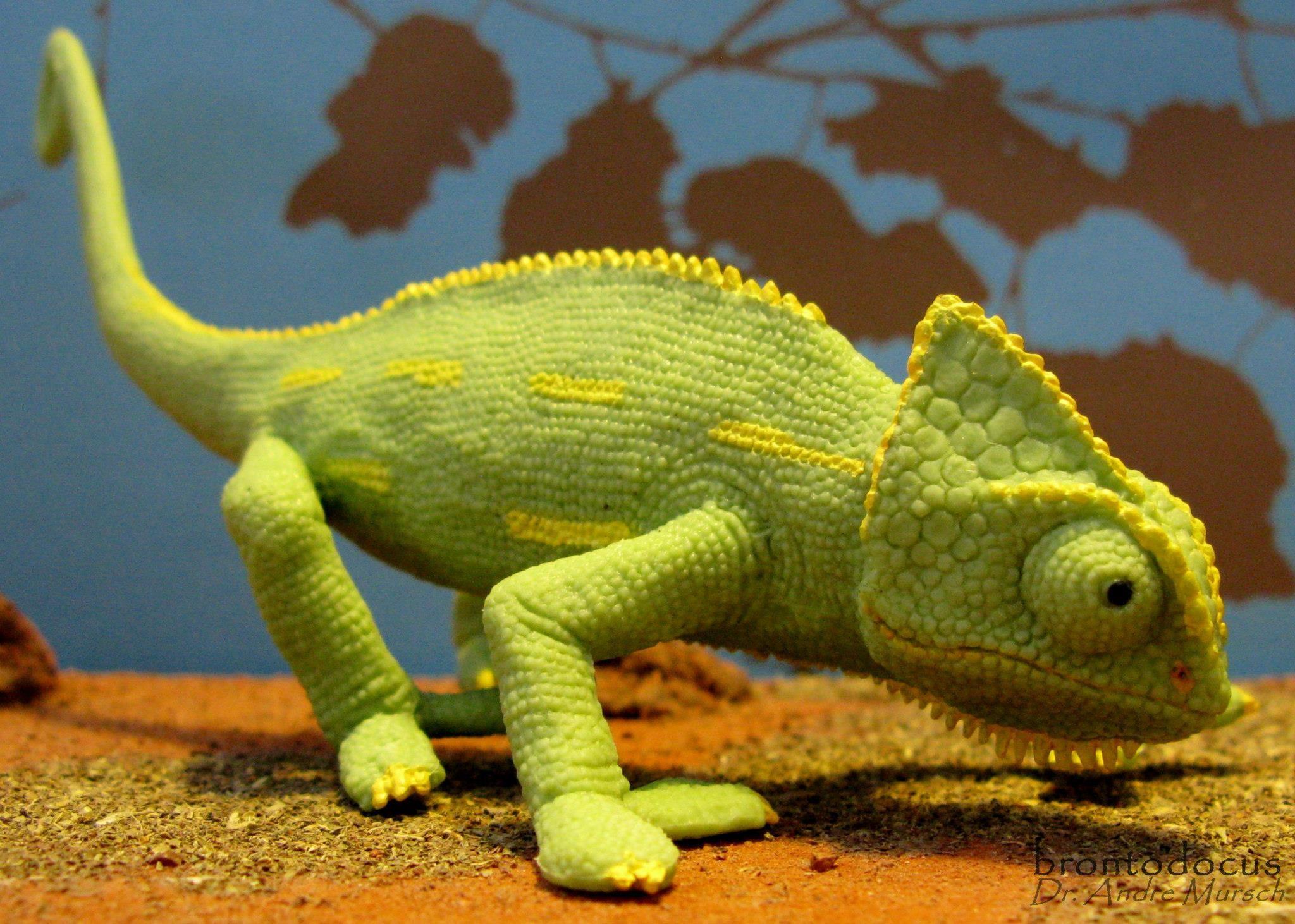 Baby Veiled Chameleon | Veiled Chameleon Baby (Safari Ltd ...