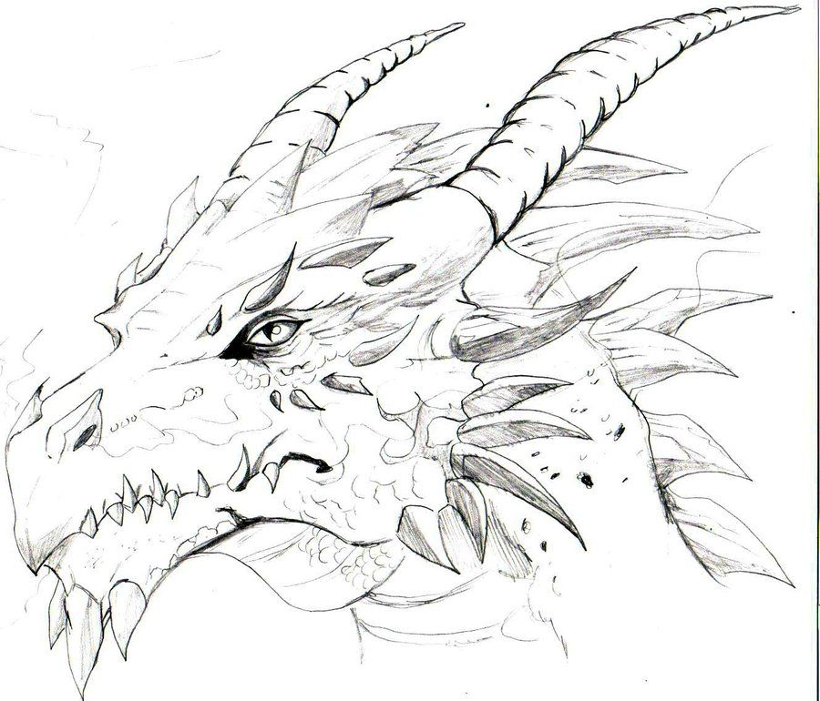 Drawings Of A Dragons Head Sketches Heads