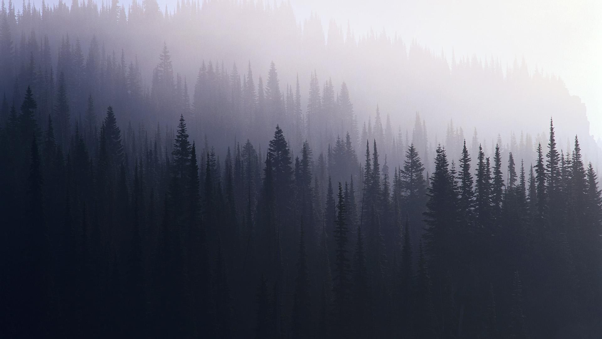 Forest In Mist 1920x1080 Hd Wallpaper Tumblr Wallpaper Phone Backgrounds Tumblr