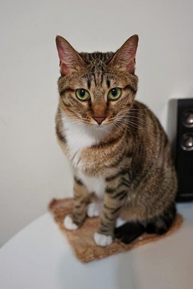 喵私talk: 【溝通個案】二十六,貓:芝麻與猴妹(下)猴妹篇