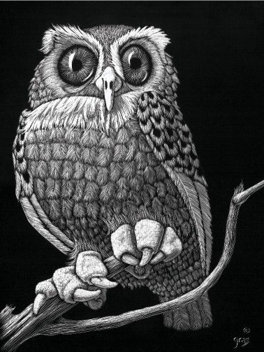 The Owl Set , 2 of each, are note cards from original scratchboards By Robin Grass on etsy. I need the originals! Love <3