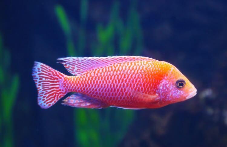 400 Swimmingly Perfect Fish Names Funny Best Pet Fish Names