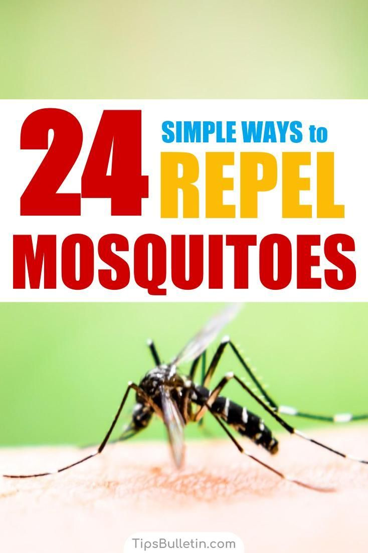 24 simple ways to repel mosquitoes mosquito repellent