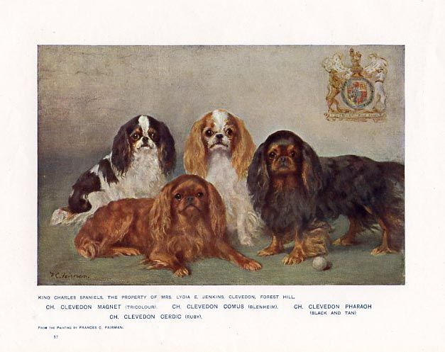 King Charles Spaniels - Print from Cassell and Company - English, 1907.