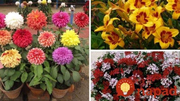 17 úžasných rastlín, ktoré vám budú kvitnúť celé leto až do neskorej jesene!