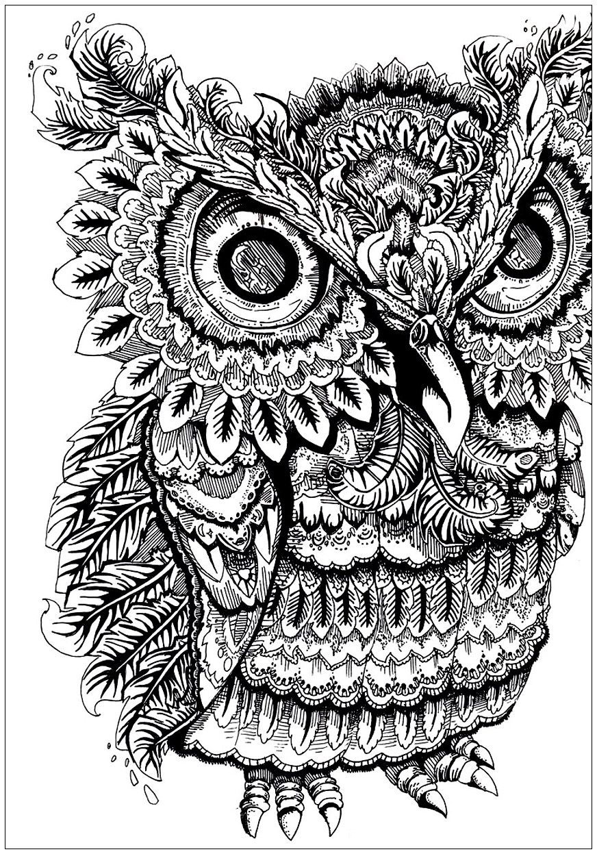 Owl big eyes - Owls Coloring Pages for Adults - Just Color ...