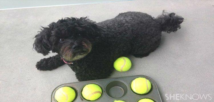 15 DIY Dog Toys Anyone Can Make | Hondenspelletjes en