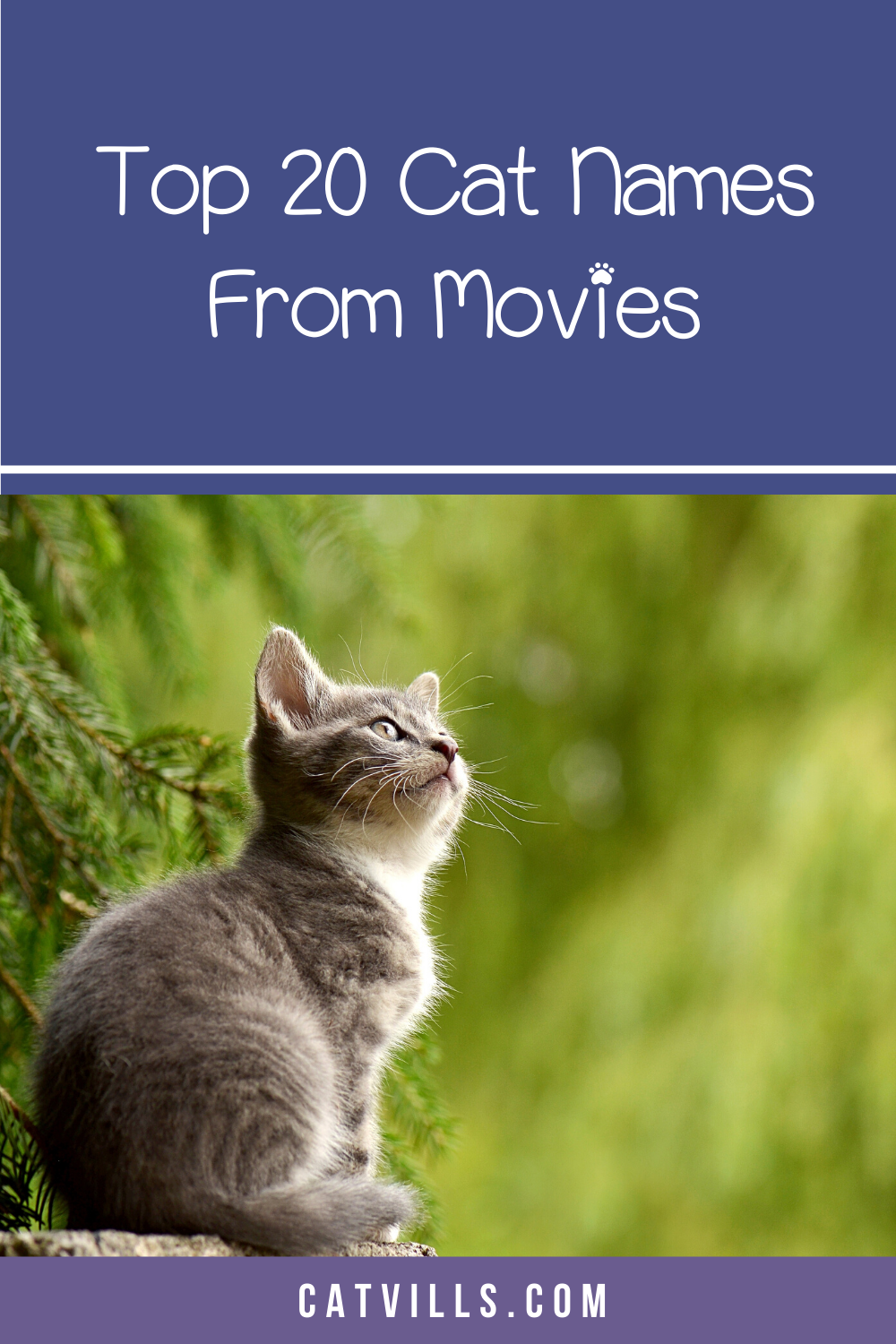 20 Sweet Cat Names from Movies to Inspire You Cat names