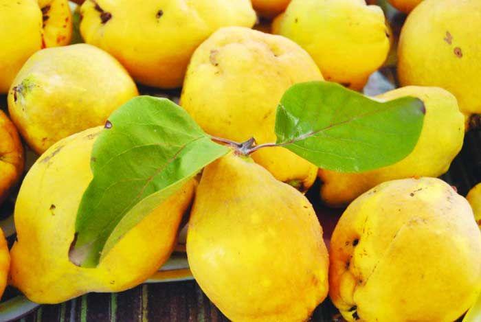 Leacul minune al toamnei, 100 de beneficii într-un singur fruct-> http://goo.gl/Bx94Rf
