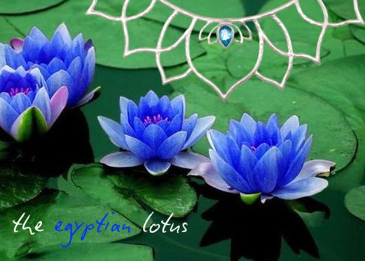 The Egyptian Lotus Spring 2013 Inspiration Beautiful Flowers